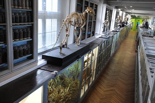 Museum-de-rouen