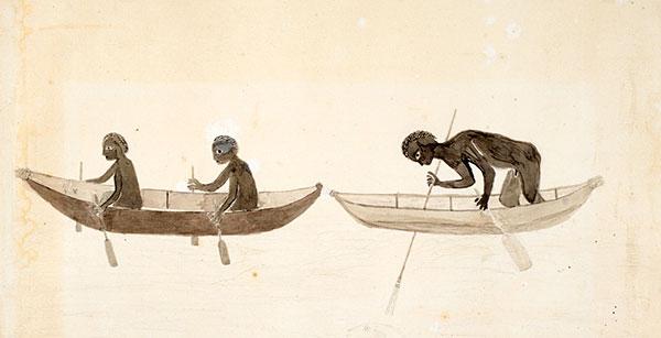 Canoe-Tupaia